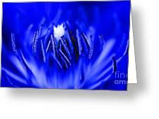 Inside A Flower Greeting Card