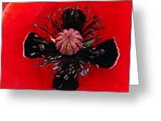 Inside A Poppy Greeting Card