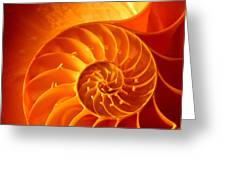 Inside A Shell Greeting Card