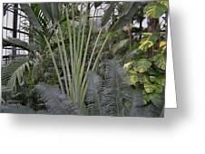 Inside Jungle Greeting Card