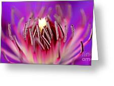 Inside Of A Flower Greeting Card