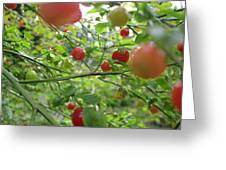 Inside The Red Huckleberry Greeting Card by Kym Backland