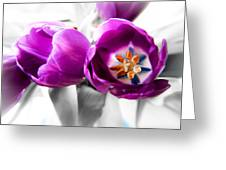 Inside Tulips Greeting Card