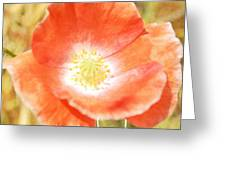 Inspire Beauty Poppy Floral Greeting Card