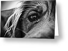 Into Her Eyes Greeting Card