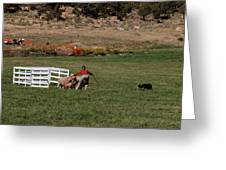 Into The Paddock Greeting Card
