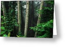 Into The Wild Greeting Card