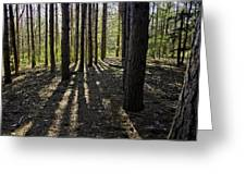 Into The Woods Spnc Michigan Greeting Card