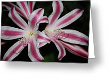 Inviting Lily Greeting Card