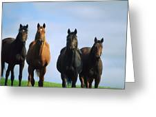 Ireland Thoroughbred Yearlings Greeting Card