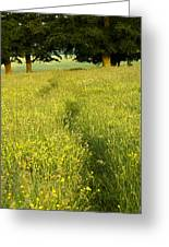 Ireland Trail Through Buttercup Meadow Greeting Card