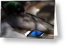 Iridescent Blue Greeting Card by Sharon Talson