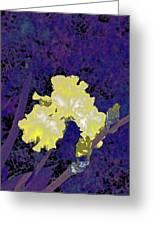 Iris 36 Greeting Card