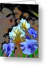 Iris 41 Greeting Card