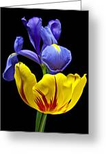 Iris And Tulip Greeting Card