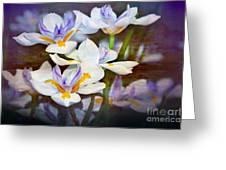 Iris Art Greeting Card