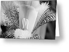 Iris Close Up In Black And White Greeting Card