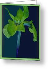 Iris Flower Design Greeting Card