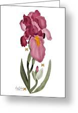 Iris II In Full Color Greeting Card