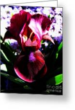 Iris Inner Beauty Greeting Card