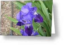 Iris Of Taos Greeting Card