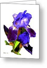 Iris On White Greeting Card