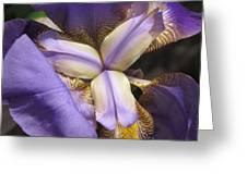 Iris Smiles Greeting Card
