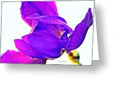 Iris Surprise  Greeting Card