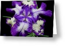 Iris Unfolded Greeting Card