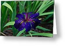 Iris With Rain Drops Greeting Card