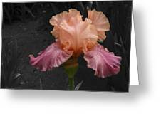 Iris2 Greeting Card