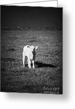 Irish Lone Calf In A Field Greeting Card