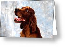 Irish Red Setter Greeting Card