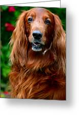 Irish Setter I Greeting Card by Jenny Rainbow