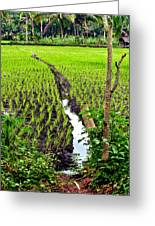 Irrigated Rice Field Greeting Card