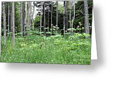 Isle Royale National Park Greeting Card