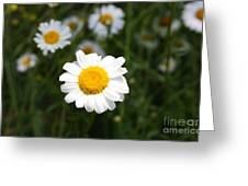 Isn't That A Daisy Greeting Card
