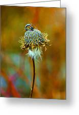 Isolated Locoweed Greeting Card