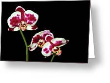 Isolated Orchids Greeting Card