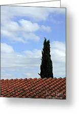 Italian Cyress And Red Tile Roof Rome Italy Greeting Card