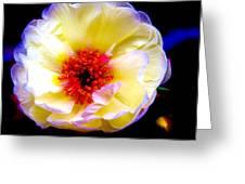 Italian Rose Greeting Card