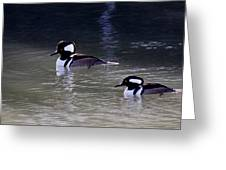 It's A Hooded Merganser Guy Thing Greeting Card