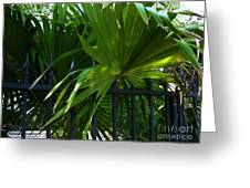 Its Pretty And Tropical In Key West  Greeting Card