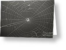 Itsy Bitsy Spider Greeting Card