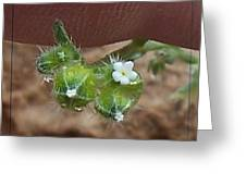 Itty Bitty Flower Greeting Card