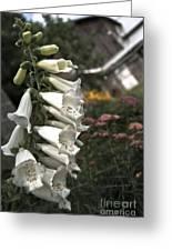 Ivory Foxglove Greeting Card