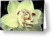 Ivory  Greeting Card