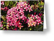 Ixora Greeting Card