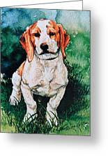 Jack Russell Woogle Greeting Card