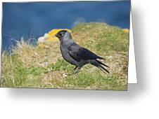 Jackdaw Gathering Nesting Materials Greeting Card